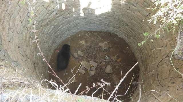Мужчина нашел медведя в 12-метровом колодце и принял решение ему помочь медведи