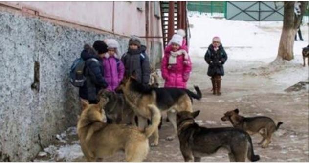 Мы кричали, но люди разбегались, как тараканы!!! На помощь детям пришли бродячие собаки