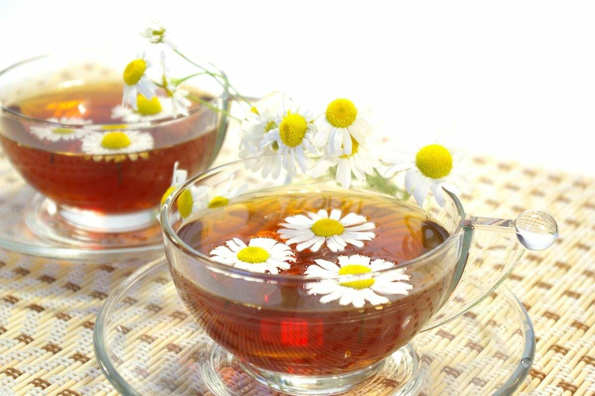 Ромашка: лечебные свойства и противопоказания здоровье,красота,народная медицина,ромашка,цветы
