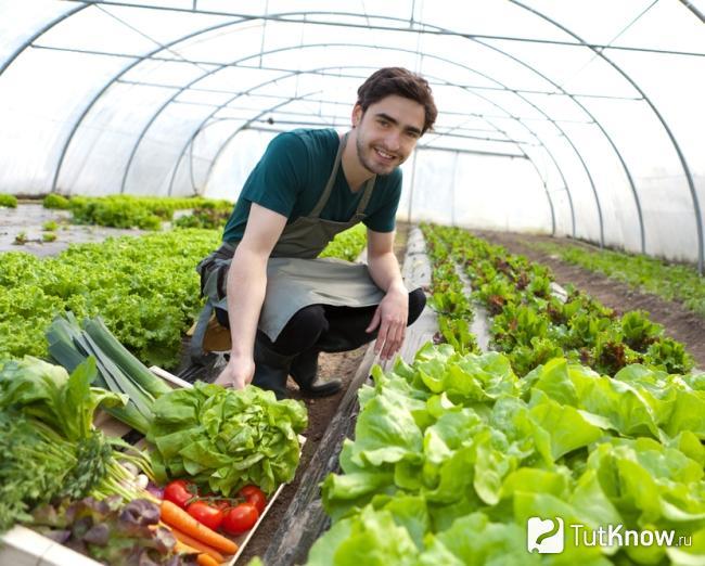 Увеличение урожайности с биоудобрением CropForce