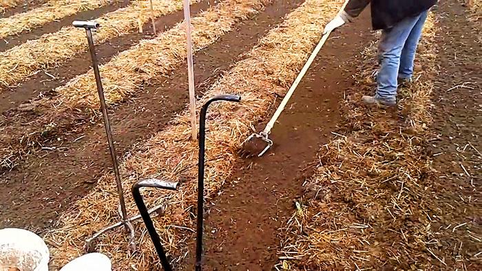Посадка картофеля без лопаты