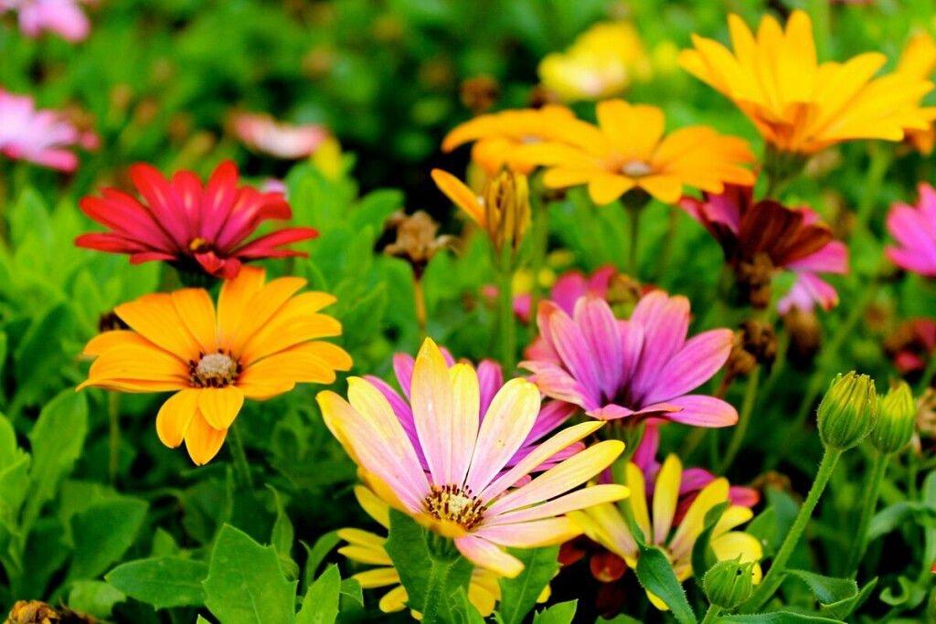 Растения, которые лечат другие растения в саду и огороде