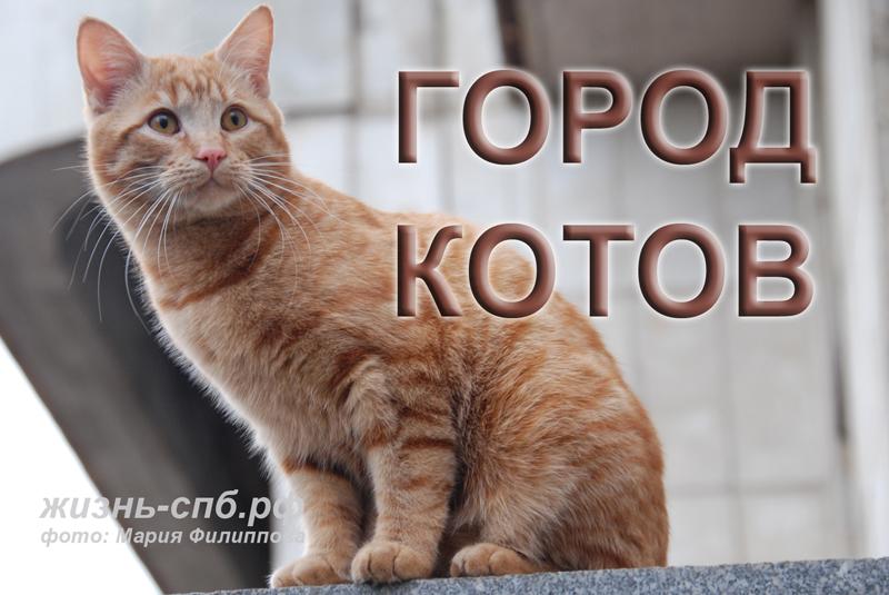 Город котов: мартовские коты покорили юного фотографа