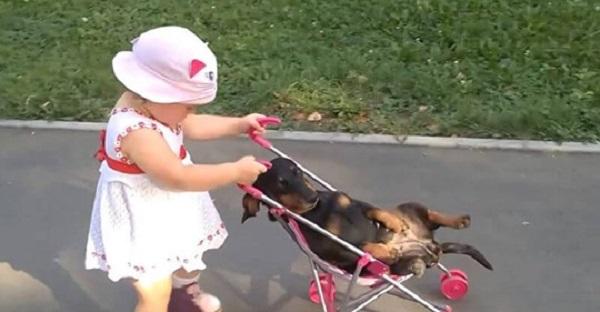 В гости к бабушке приехала внучка. Кот подался в бега, а вот пес не успел!