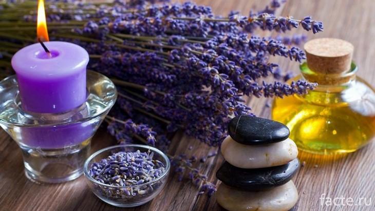 Теории и мифы об обонянии и запахах запахи,здоровье,обоняние