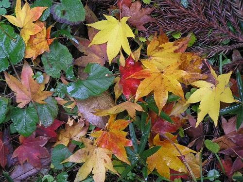 Листья-талисманы…