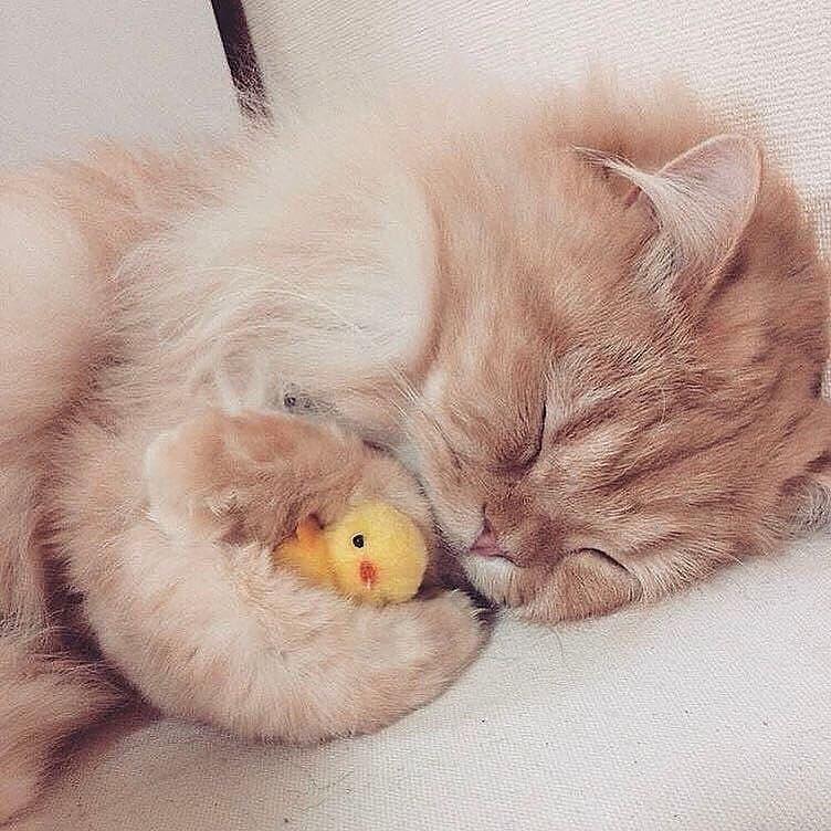котенок сладких снов картинки трасса закрыта
