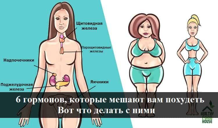 Эстроген поможет похудеть