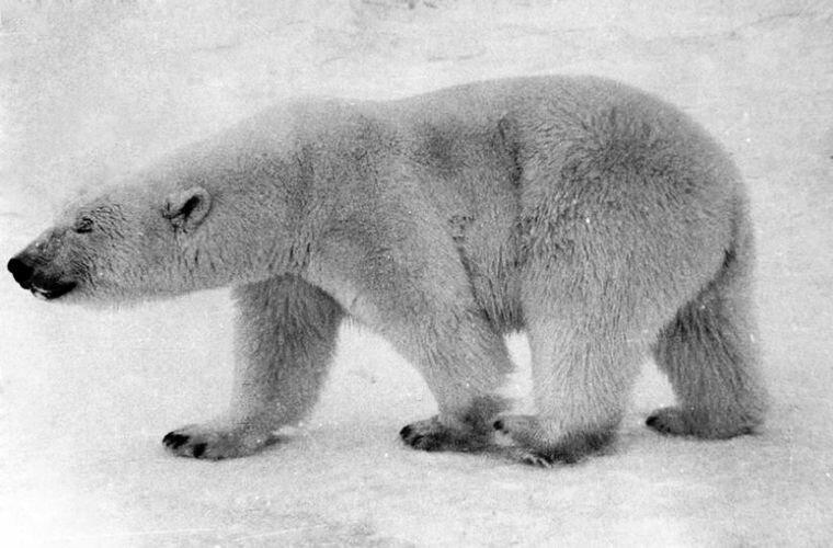 Законный обитатель здешних мест Ада Блэкджек, арктика, интересно, история, познавательно, факты