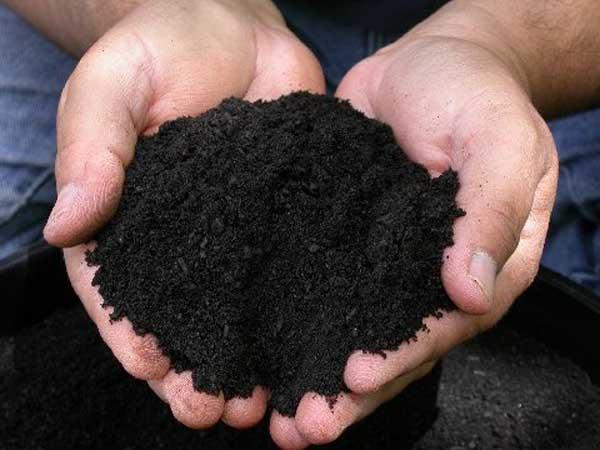 3 способа улучшить почву