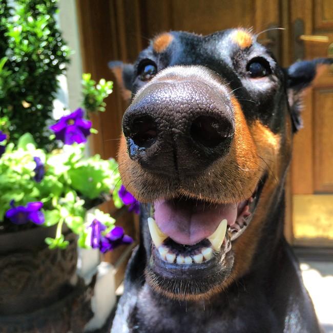 улыбающаяся собака фото девушка готова
