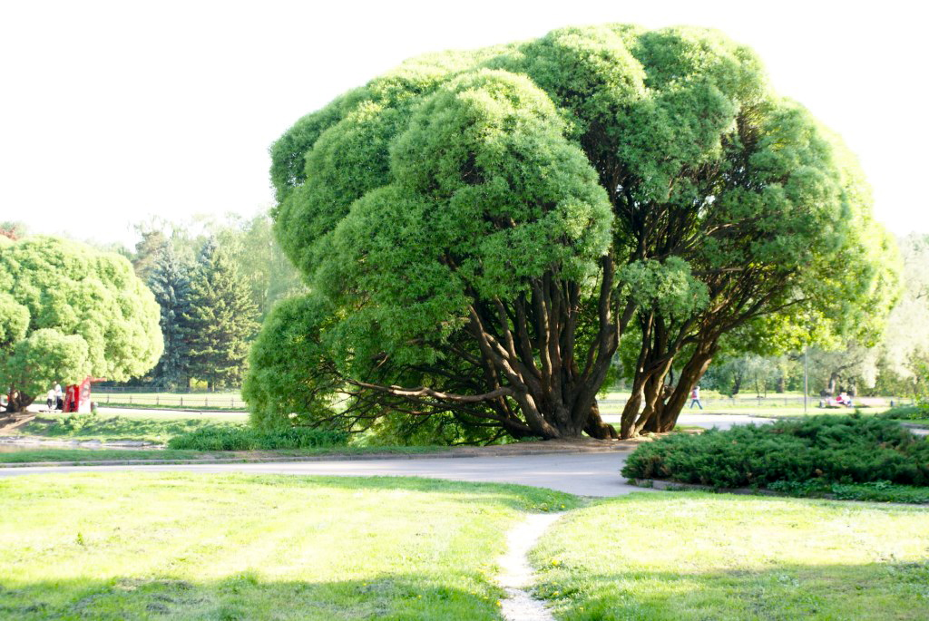 интерьер природа красивые деревья в москве фото данных мероприятиях предприятие