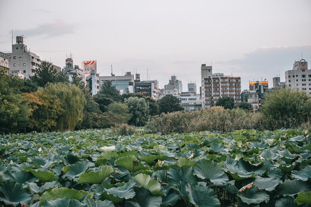 Токио: Уэно и не только