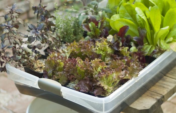 Огород в домашних условиях: свежая зелень на столе круглый год