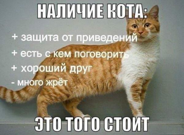 Соскучились по пятничным котикам?