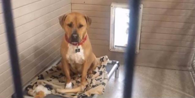 На протяжении нескольких лет пёс находится в приюте и никто не хочет его забирать