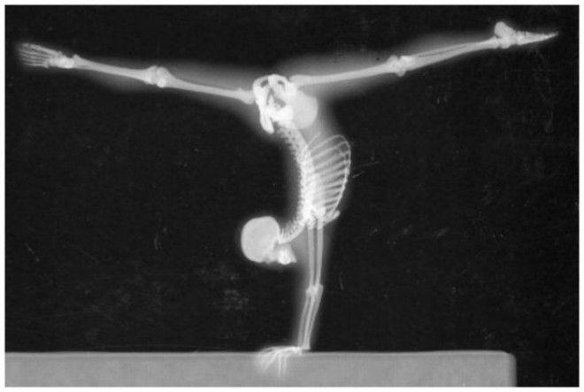 Трюк гимнастки