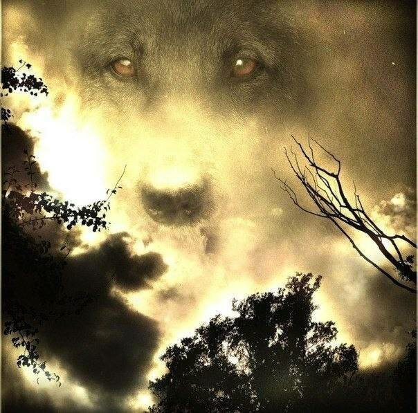 Прости меня, пёс! от Митхун Чакрабортенков за 10 апреля 2019 животные, преданность, предательство, собака, человек