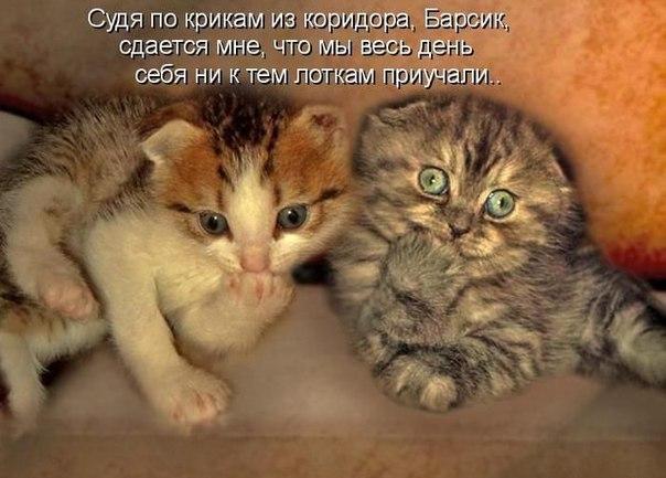 Картинки с надписями смешные с кошками и котятами