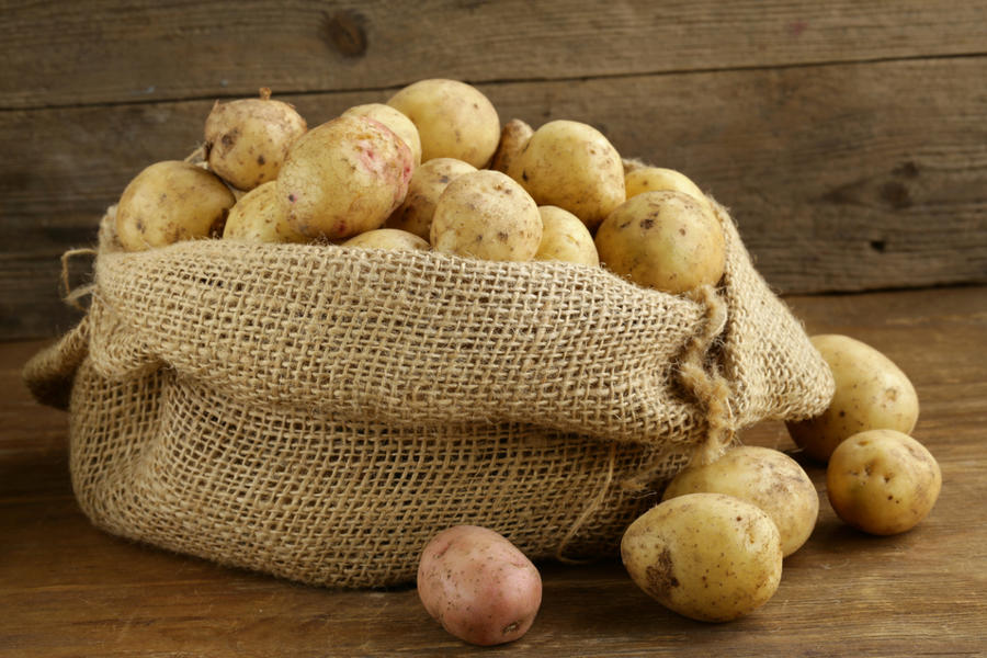 Как сохранить урожай картофеля до весны без потерь дача,сад и огород,урожай