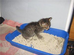 Как приучить котенка ходить в лоток: эксперименты с расположением лотка, а также советы специалистов