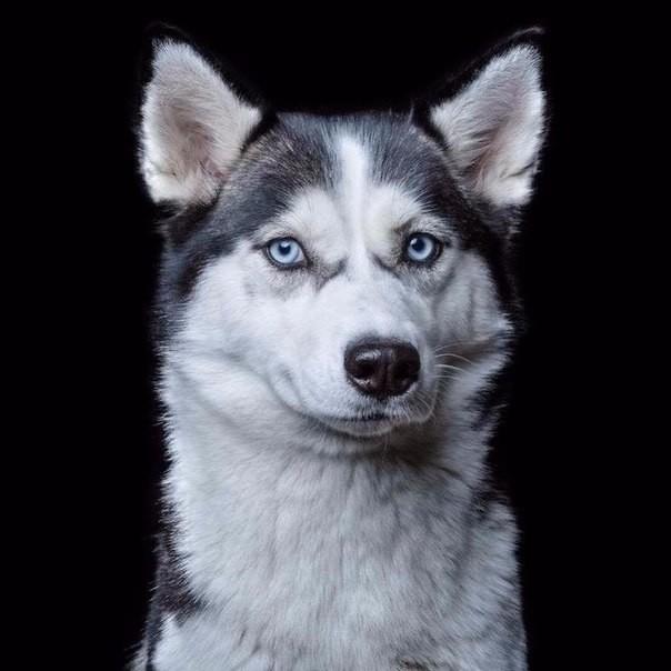 Уникальные портреты, на которых показан характер каждого животного