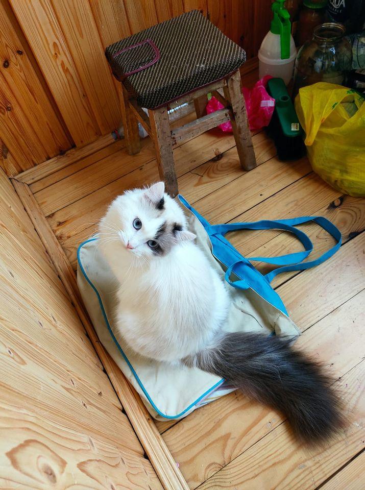 Игры с кошками. Самые популярные вопросы зоопсихологу домашние животные,зоопсихология,игры,кошки,питомцы