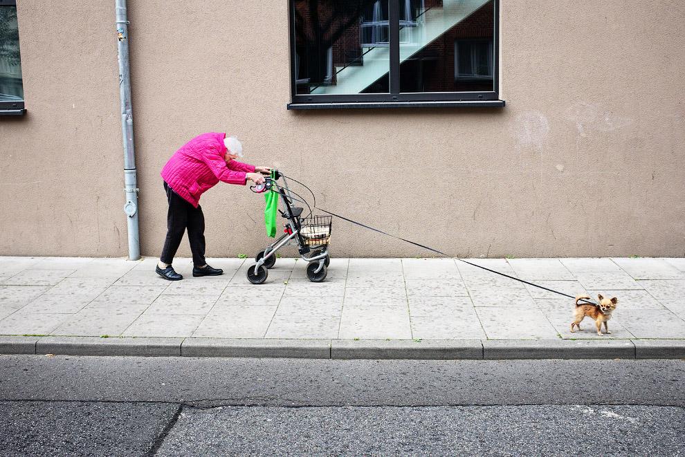 Пожилая дама с собачкой