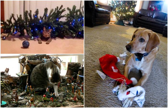 Домашние любимцы наглядно показывают свое отношение к новогодним праздникам