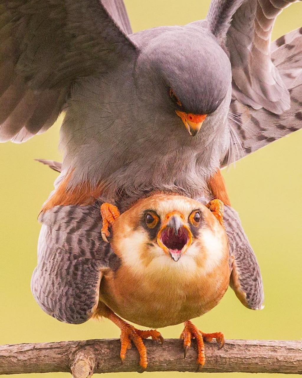 Замечательные снимки птиц Сунила Гопалана