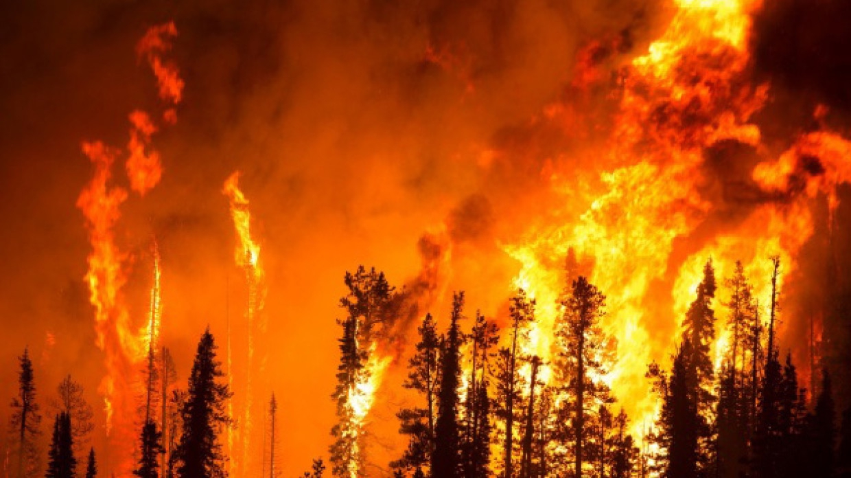 Спасатели потушили все природные пожары в Челябинской области Происшествия