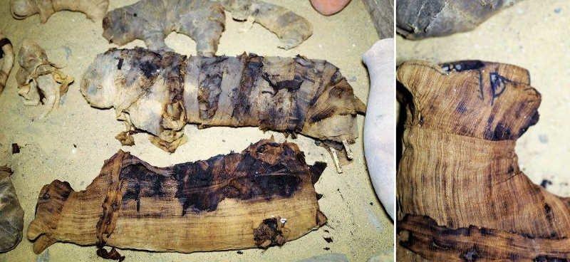 Древние египтяне использовали мумии животных в качестве религиозных жертв Египт, в мире, гробницы, кошки, мумия, находка, пирамиды