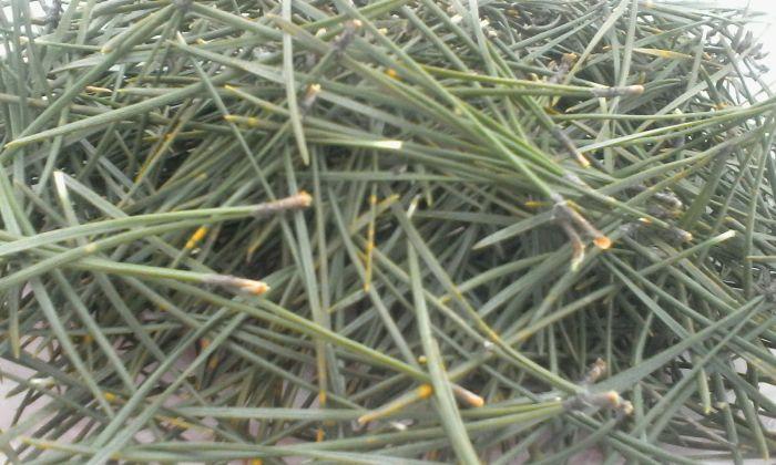 Годятся ли сосновые иголки для мульчирования?