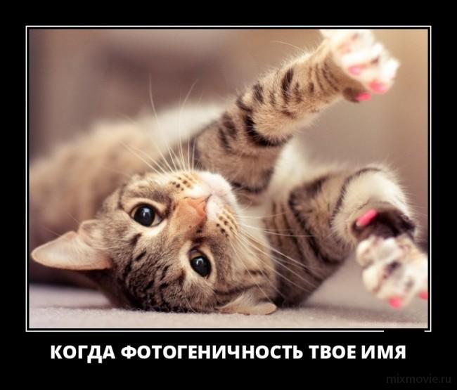 Веселые демотиваторы про животных для хорошего настроения демотиваторы свежие,картинки с надписями,подловили,смешные демотиваторы,смешные комментарии,юмор