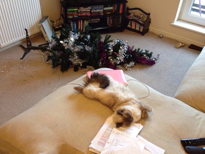 10+ фото домашних животных, которые не любят новогодние елки домашние животные,наши любимцы,новогодний декор