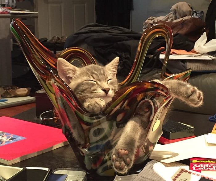 Moms Kitty Cat Loves To Nap In A Vase