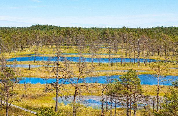 Топи как национальное достояние: почему эстонцы так гордятся своими болотами