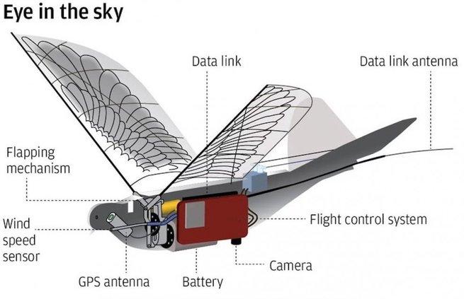 Птицы-дроны – новые служители безопасности Китая
