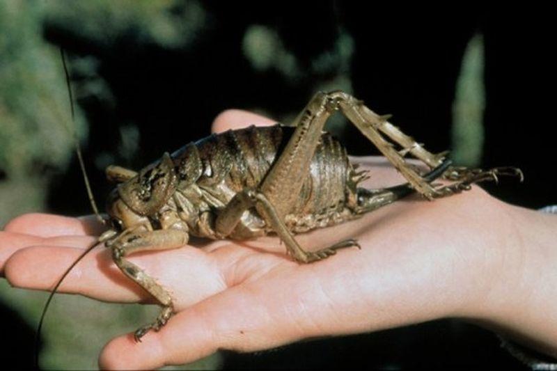 Топ-10 насекомых-рекордсменов