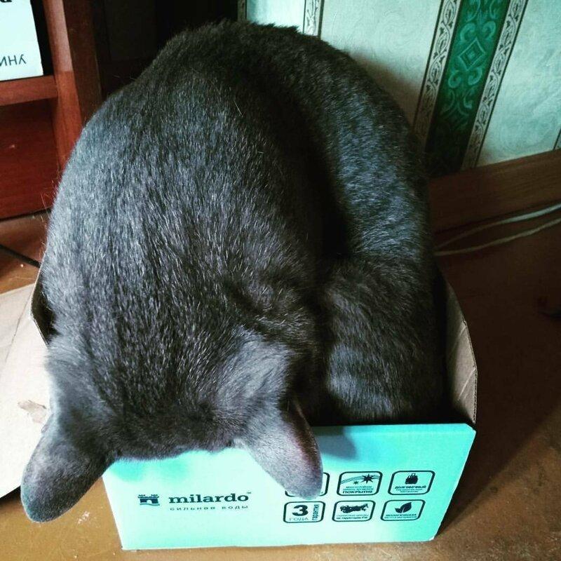 Главное, что есть коробка. Размер не имеет значения!