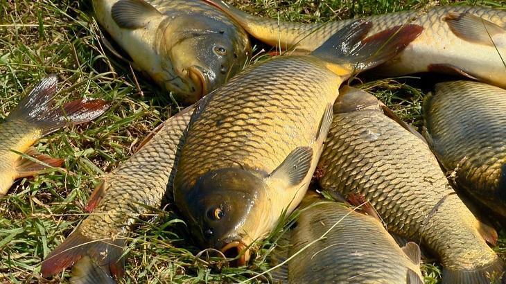 5 простых способов удержать рыб в точке ловли