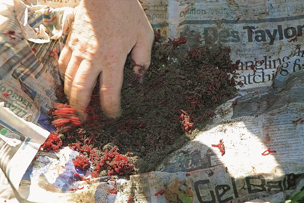 Мотыля разбивают грунтом или специальной разбивкой.