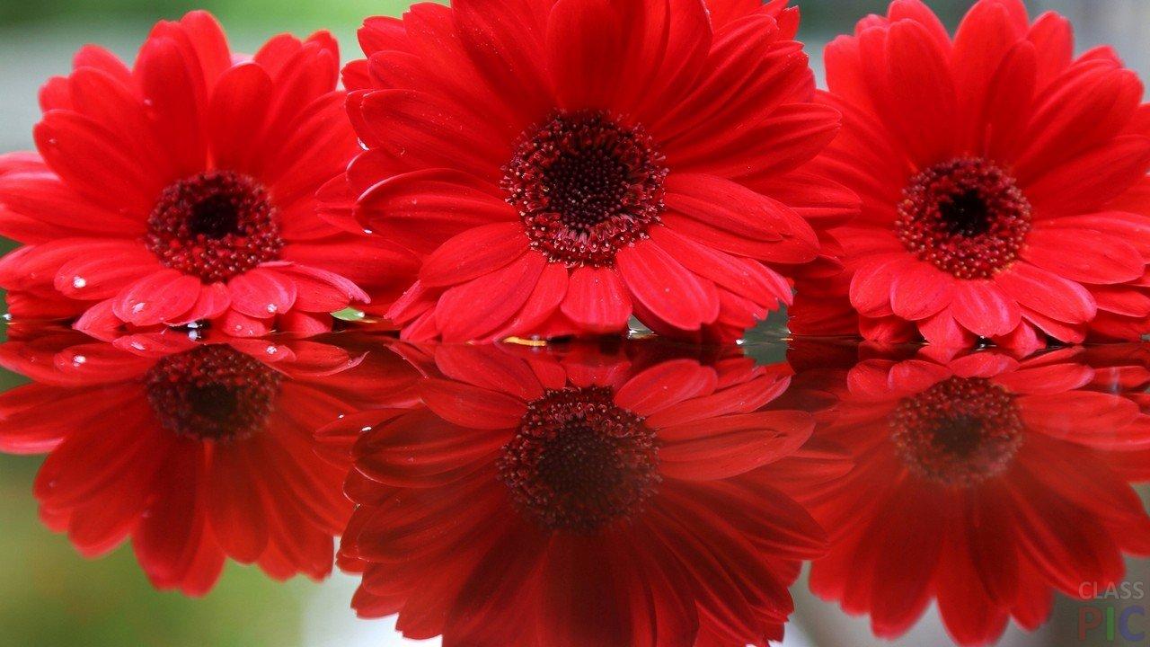 решил, красные только красные цветы фото интересно, как растут