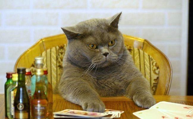 Дневник Кота. Начало