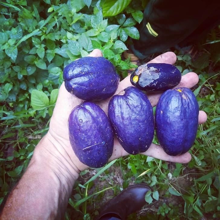 Экзотические фрукты, которые вы, возможно, увидите сейчас в первый раз