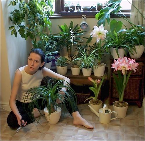 Размещение цветов в квартире