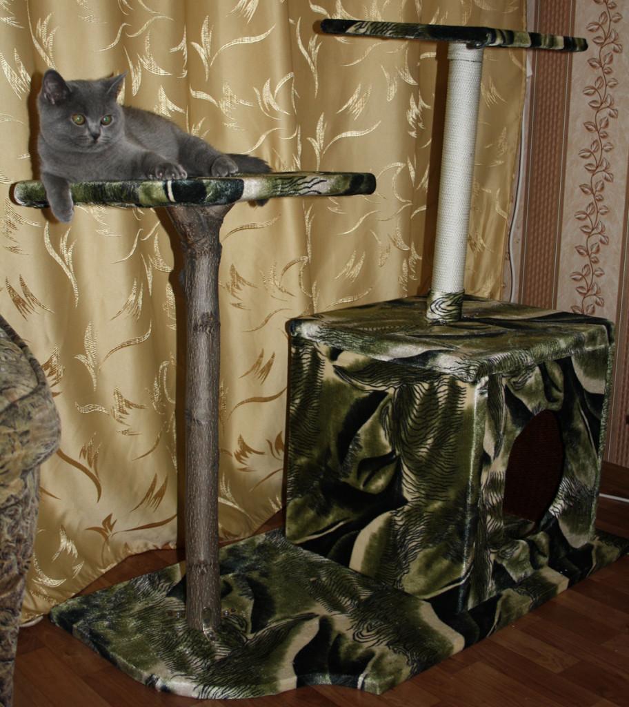 также сделать домик для кошки своими руками фото маринованный