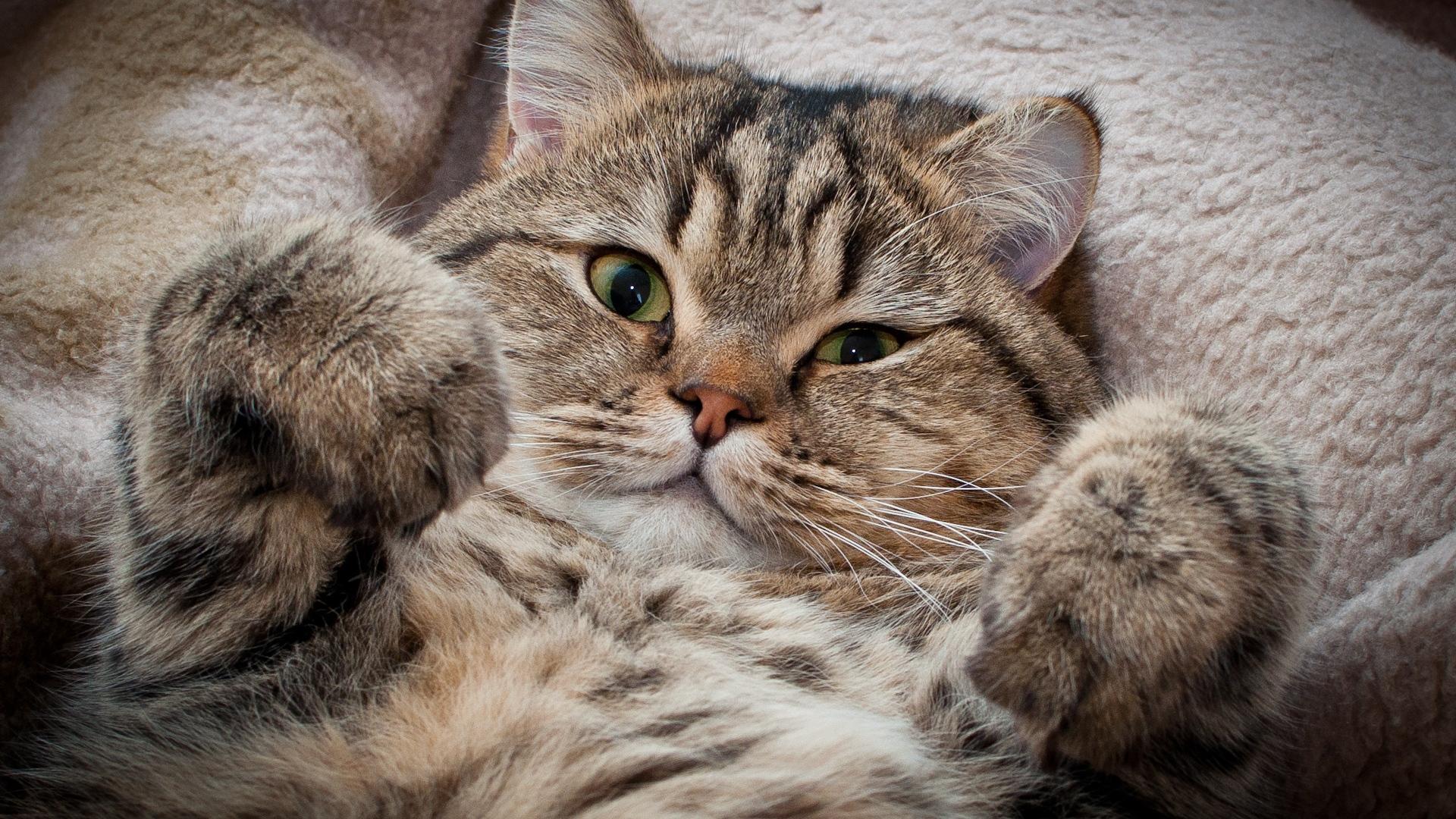 Важные факты о кошачьем уме и повадках, которые должен знать каждый котовладелец