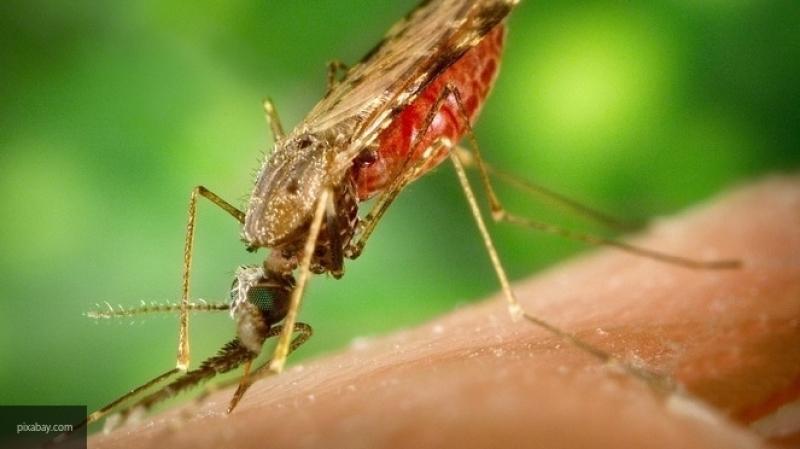 Азиатских тигровых комаров в Китае практически уничтожили радиацией
