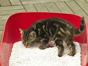 Как приучить котенка ходить в лоток: эксперименты с расположением лотка, а также советы специалистов котенка, туалет, лоток, котенок, кошачий, ходить, когда, кошка, питомца, место, чтобы, может, рядом, туалета, лотку, будет, вашего, кошку, кошки, воспитание
